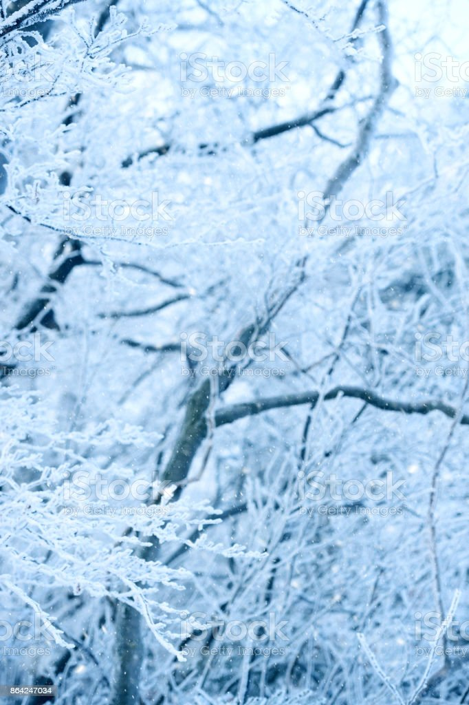 Frost in forest royalty-free stock photo