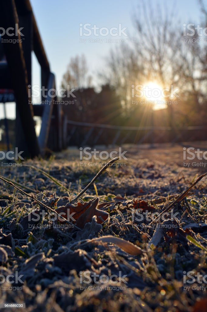 Frost in the morning royalty-free stock photo