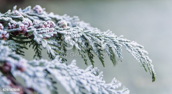 Frost on a Tree, Winter Background, Cold Outside