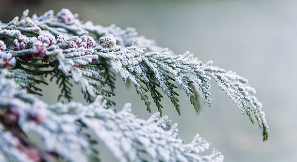 frost on a tree, winter background, cold outside - february stock photos and pictures