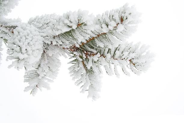 frost sur Brindille - Photo
