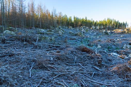 Frost on a deforestation area on a cold morning in Blekinge, Sweden.