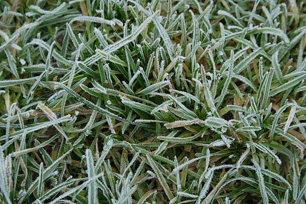 Frost on grass stock photo