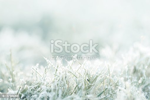 frost on the grass