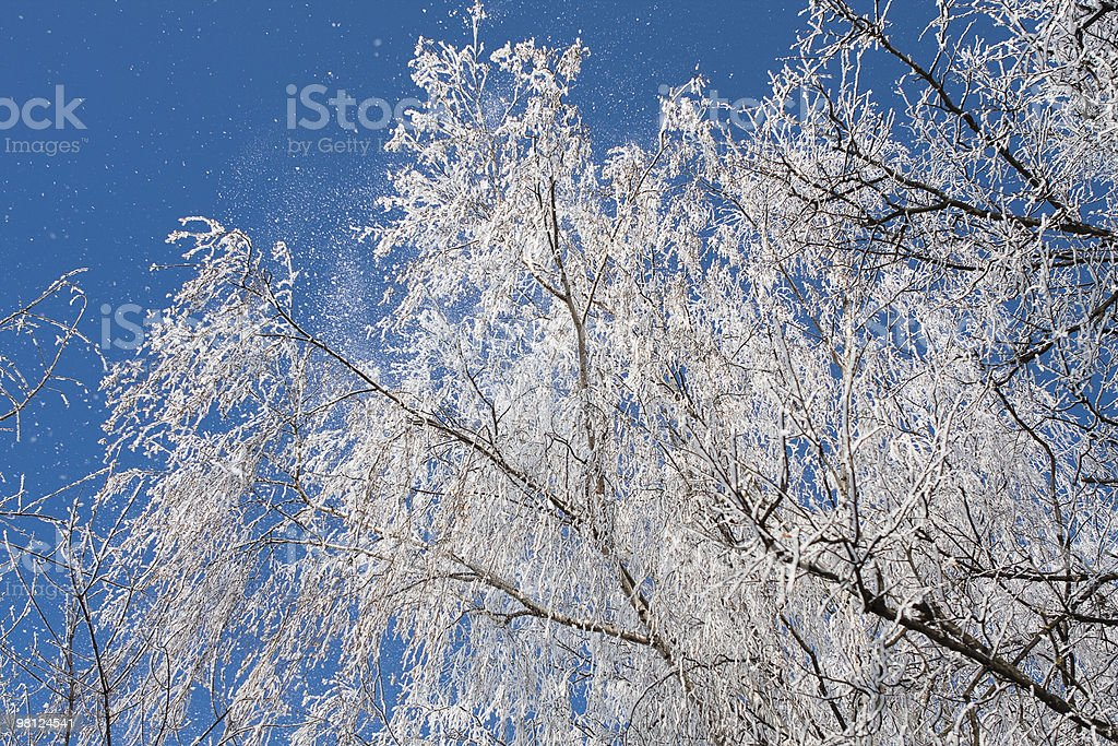 frost on the tree royalty-free stock photo