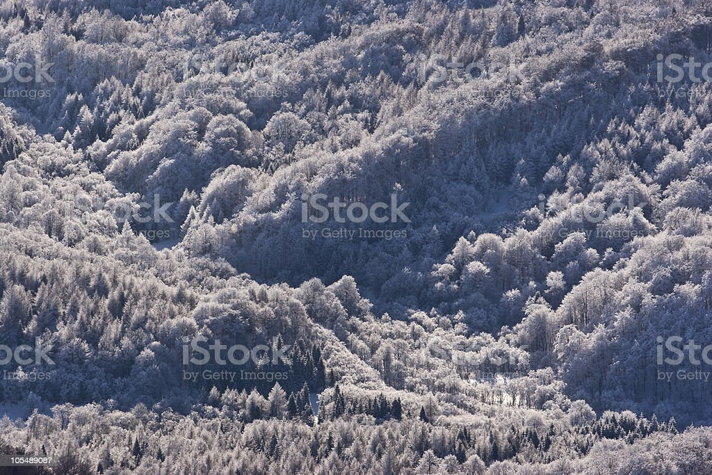 Frost on trees royalty-free stock photo