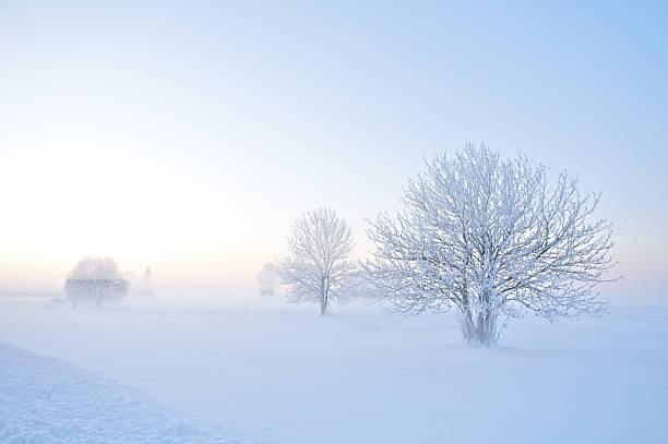 Frost - foto de stock