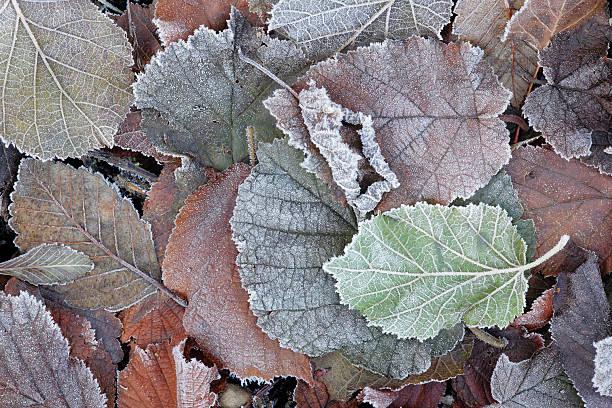 Frost – Foto