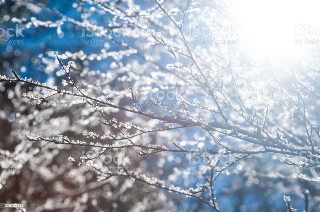 frost royalty-free stock photo