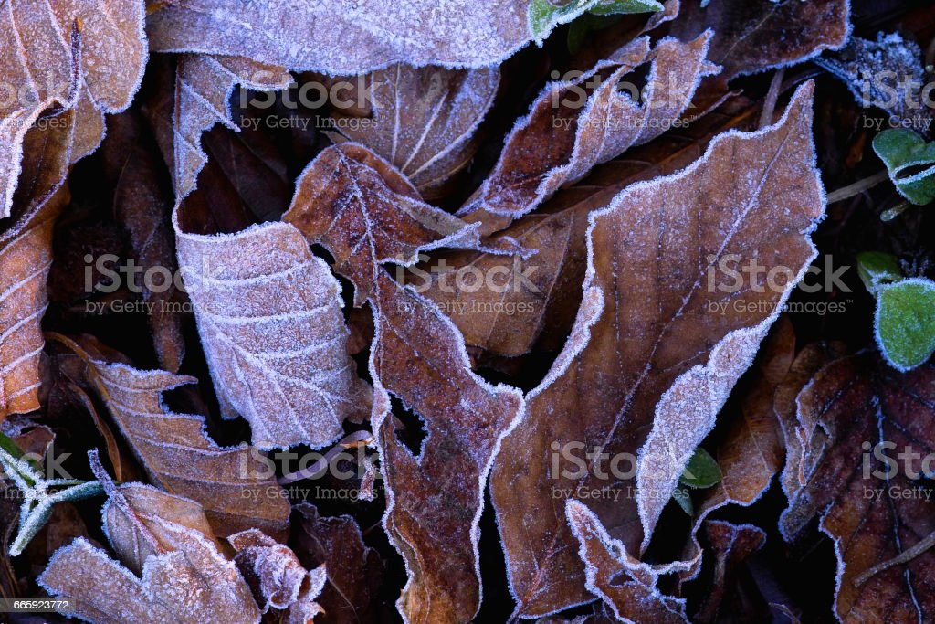 Frost foto stock royalty-free