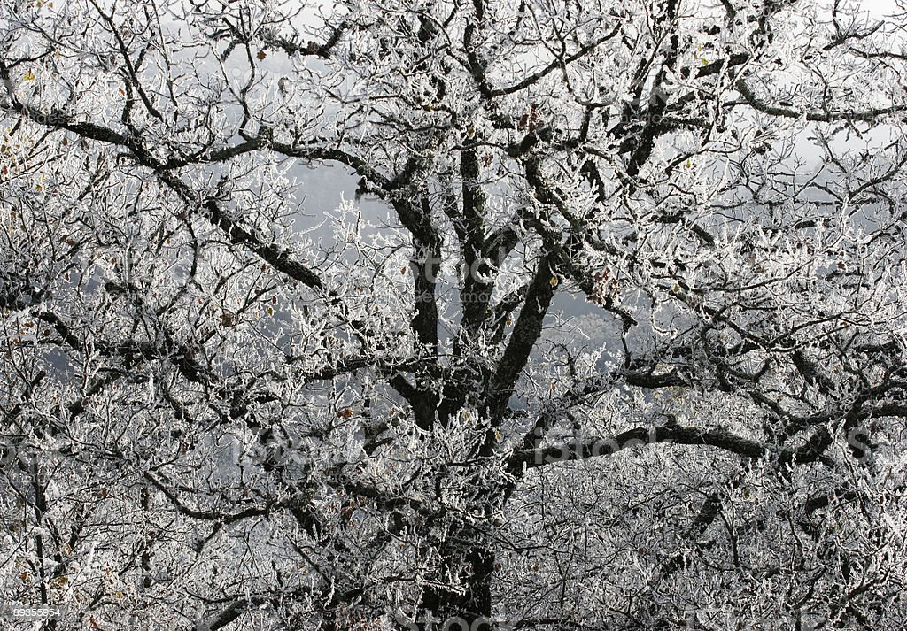 Frost tree royalty free stockfoto