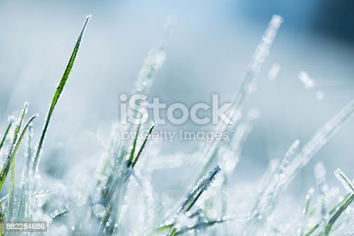 istock Frost-covered grass 882284686