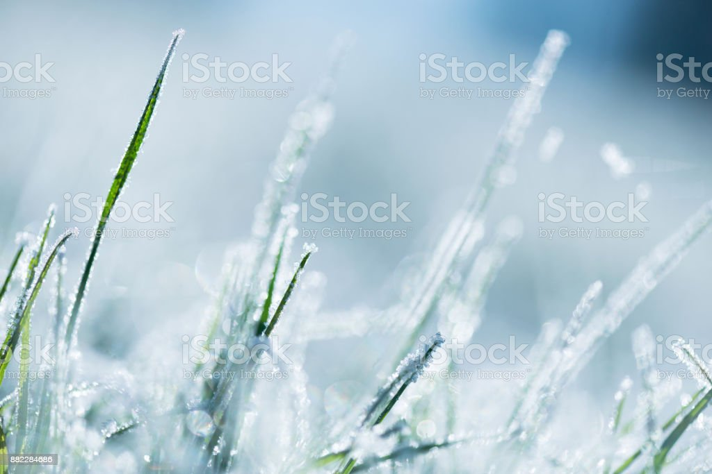 Frost-covered grass stock photo