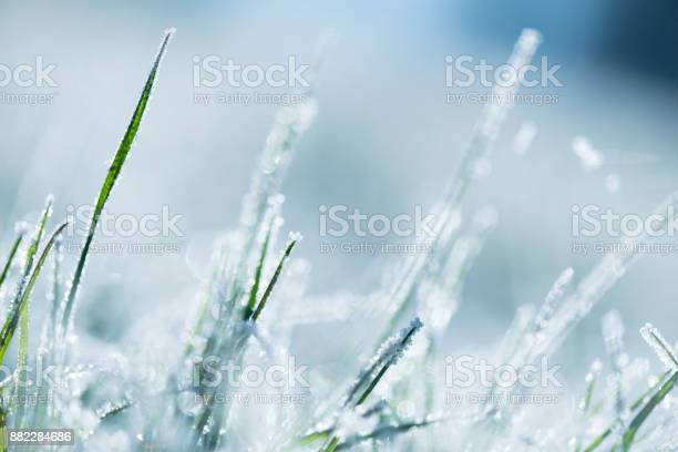 Photo of Frost-covered grass
