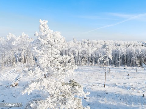 frost-covered tree photographed from a drone, beautiful blue sky, drone point view, Christmas card, new year postcard, beautiful frost, cold weather