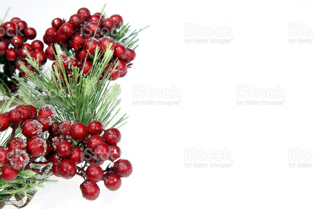 Frosted Berries royalty-free stock photo