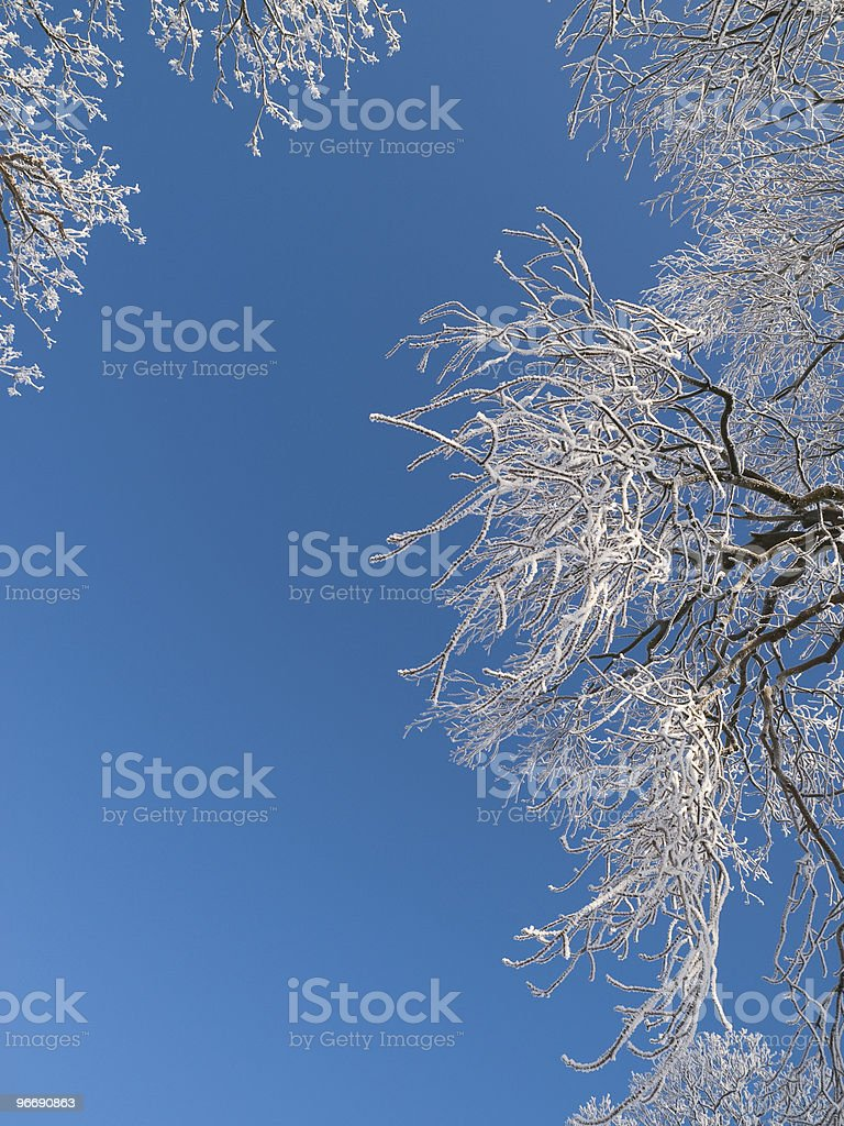 Frosted Branches royalty-free stock photo