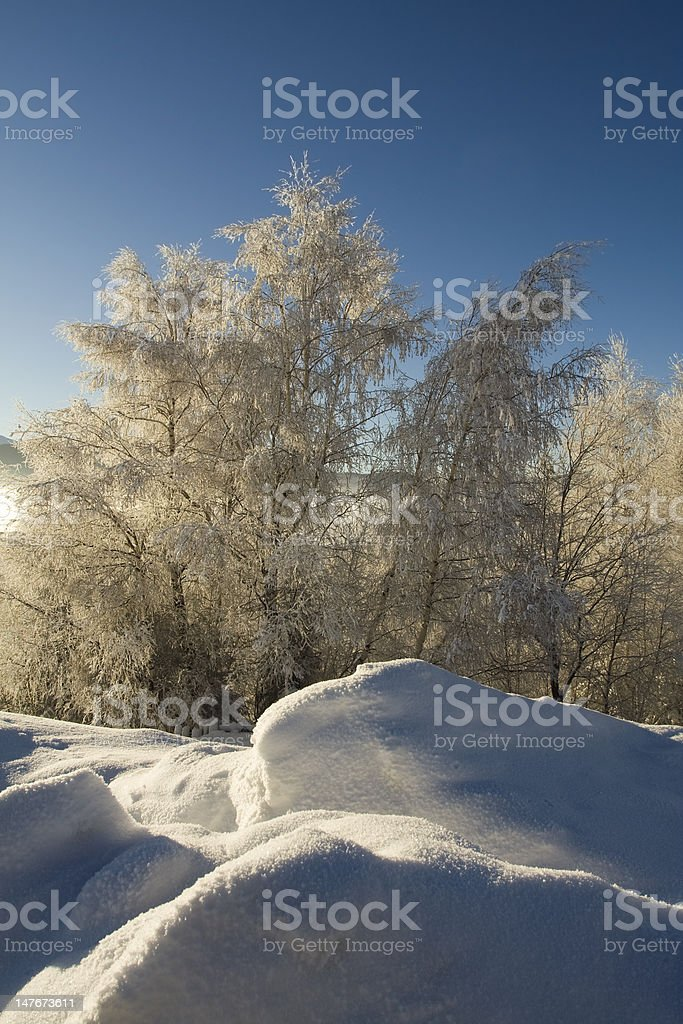 Frosted forest stock photo