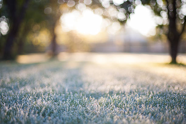 frosted grass on a blurry bokeh sunrise backdrop - kaltes wetter stock-fotos und bilder