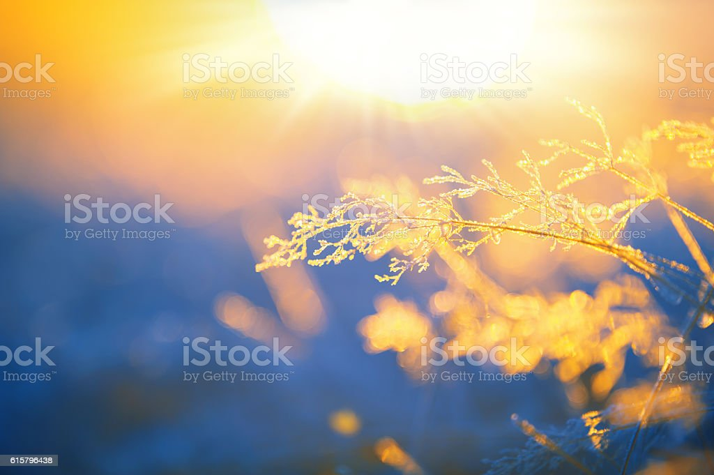 Frosted grass stock photo