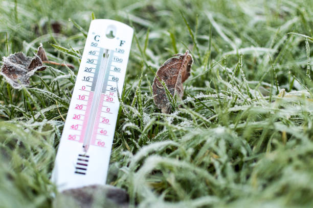 Frosted grass with a thermometer at Winter time stock photo