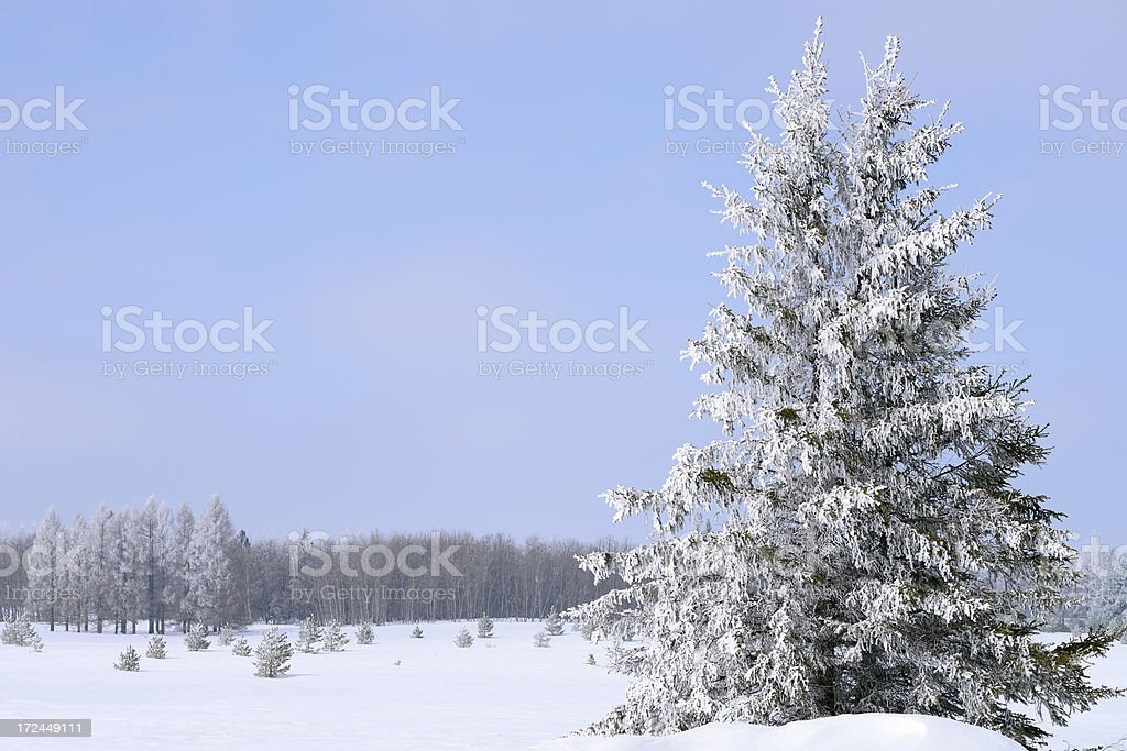Frosted Landscape stock photo