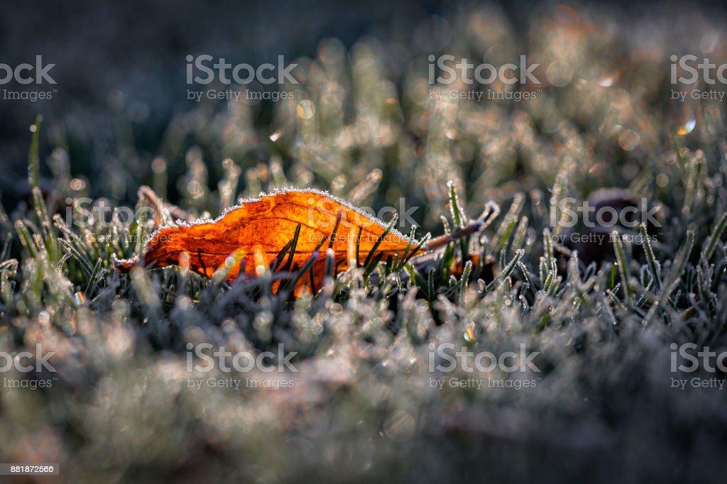 Frostade blad i ryggen lit morgonljuset bildbanksfoto