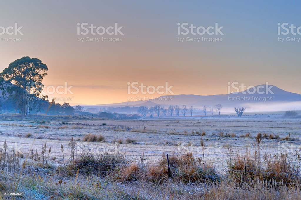 Frosted Morning stock photo