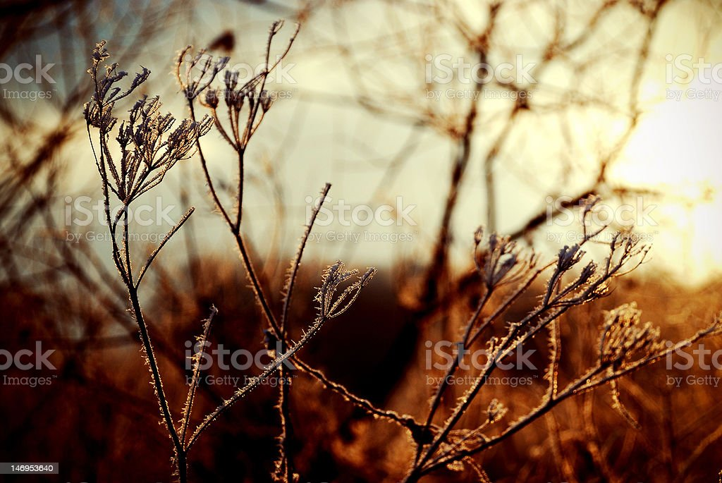 Frosted royalty-free stock photo