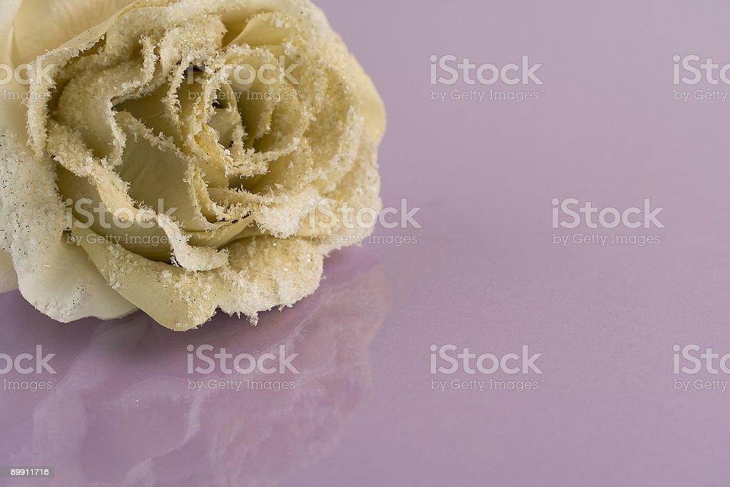 Mattiertes rose Lizenzfreies stock-foto