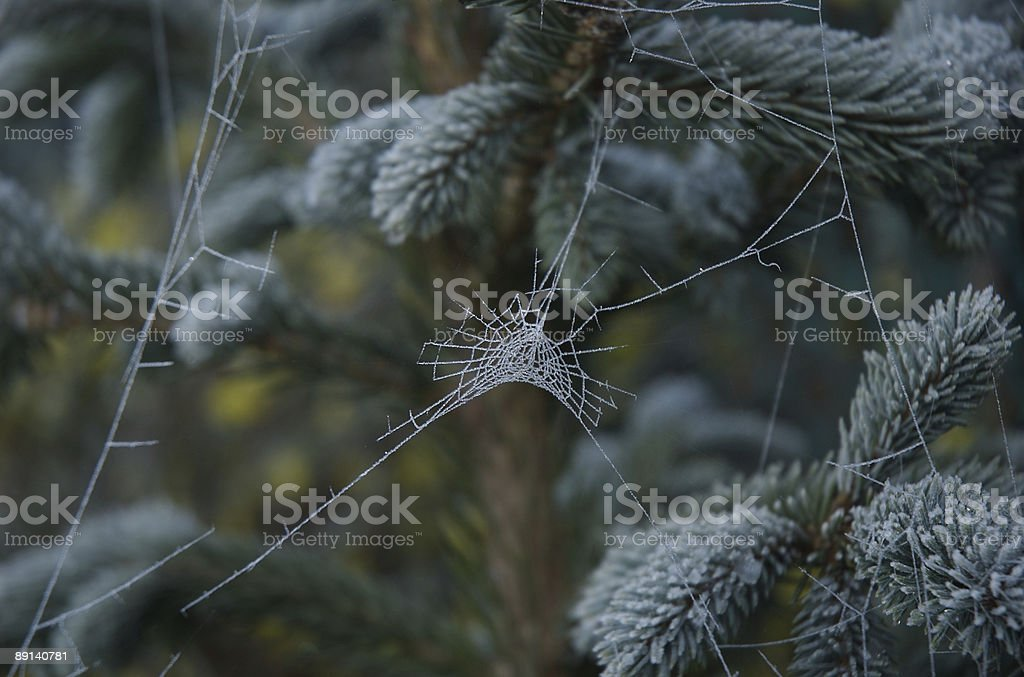 Frosted spider web stock photo