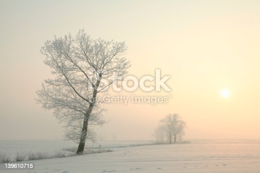 1034754000 istock photo Frosted tree at dawn 139610715