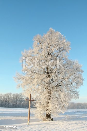 1034754000 istock photo Frosted tree at dawn 153707560