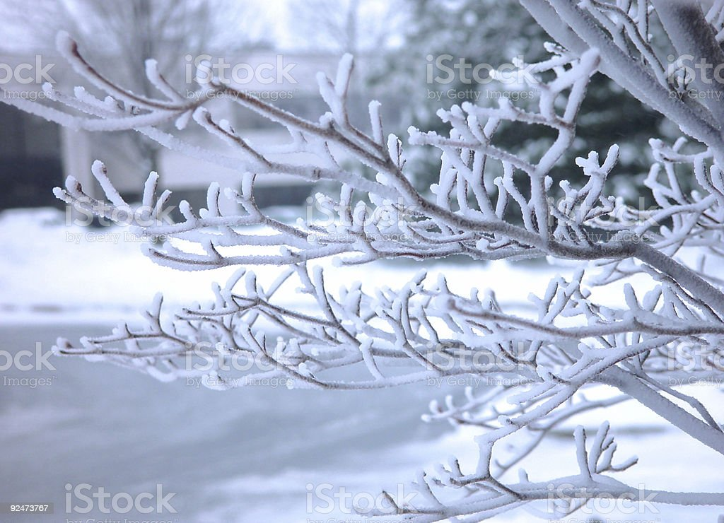 frosted tree brunch royalty-free stock photo