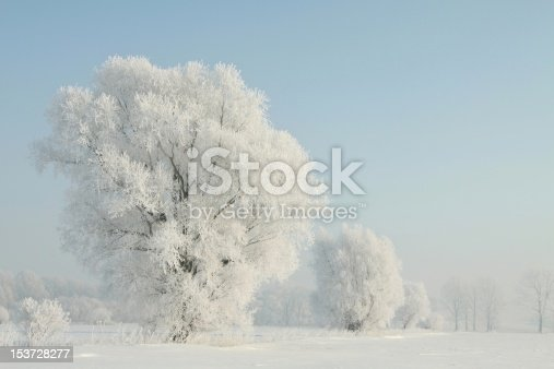 1034754000 istock photo Frosted tree in the morning 153728277