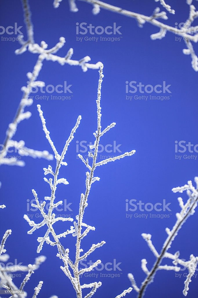 Frosted Tree stock photo