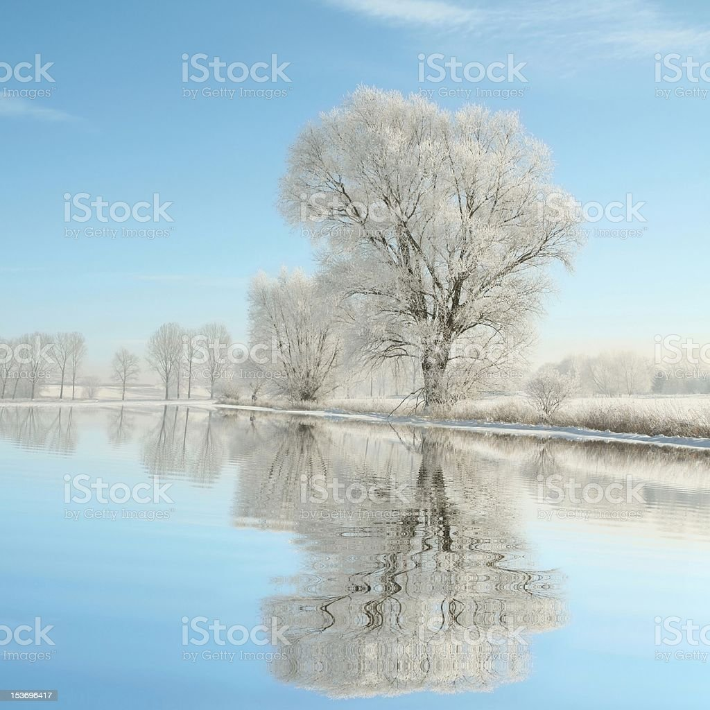 Frosted trees against a blue sky royalty-free stock photo