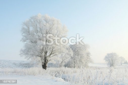 1034754000 istock photo Frosted trees illuminated by the morning sun 153762391