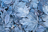 Leaf, Frost, Frozen, Macrophotography, Backgrounds