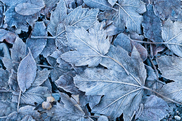 frosty autumn leaves background - ice crystal stock pictures, royalty-free photos & images