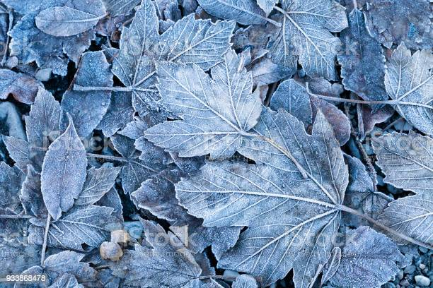Photo of Frosty autumn leaves background