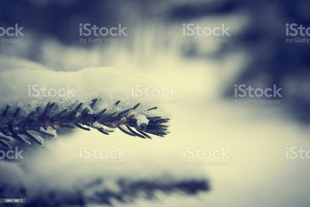 Frosty Branch with Snow in Winter royalty-free stock photo