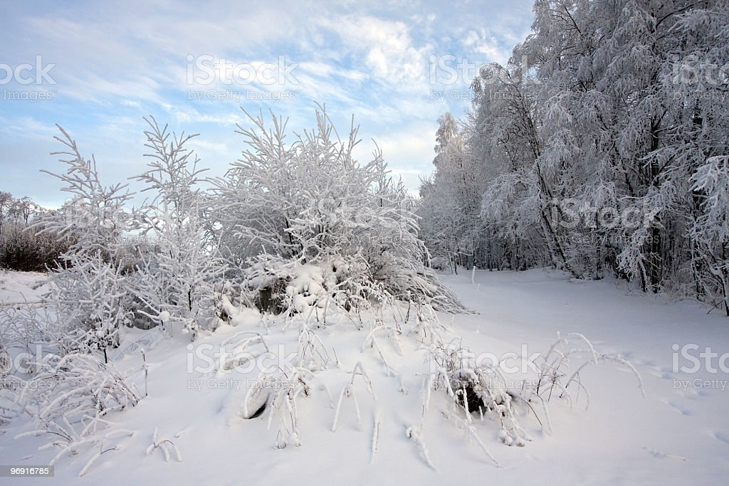 Frosty Christmas scenic picture of ice-covered bushes and snowbound forest royalty-free stock photo