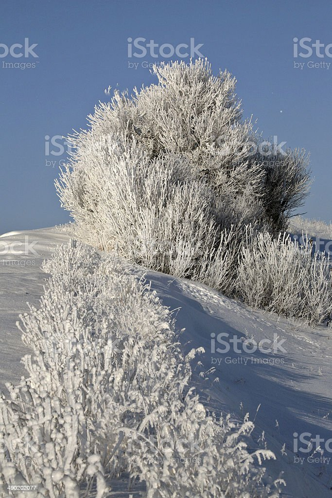 Frosty Country Day stock photo