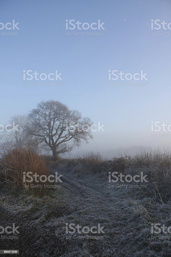 Frosty County Scene royalty free stockfoto