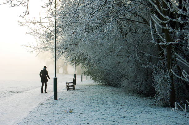 Frosty day and frozen trees in ice. Snowfall in the early morning hours at a park stock photo