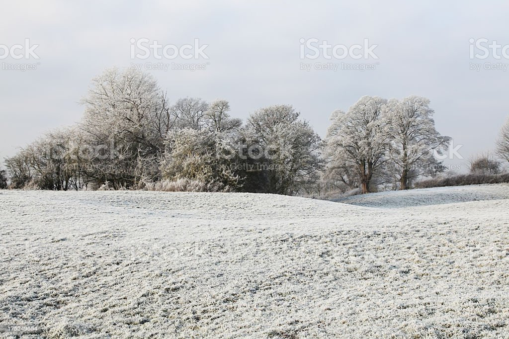 Frosty field and trees royalty-free stock photo