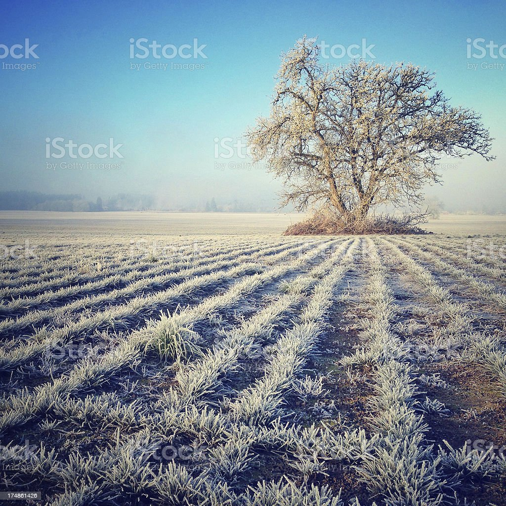Frosty field in winter stock photo