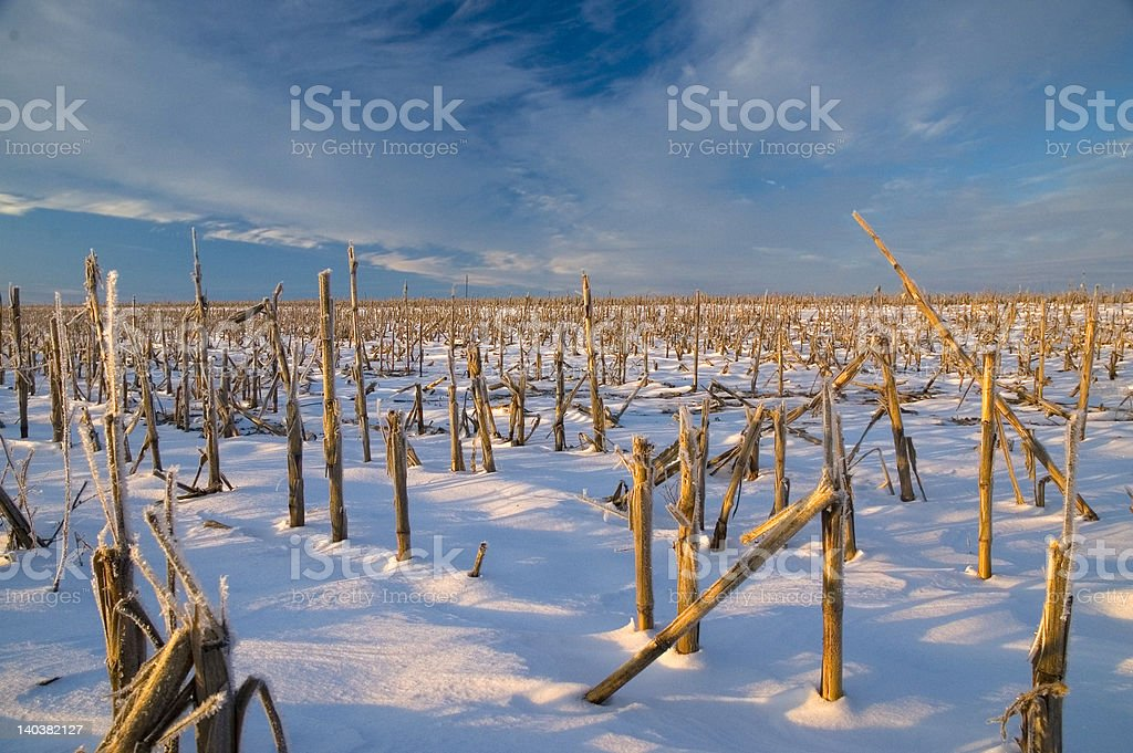 Frosty Field royalty-free stock photo