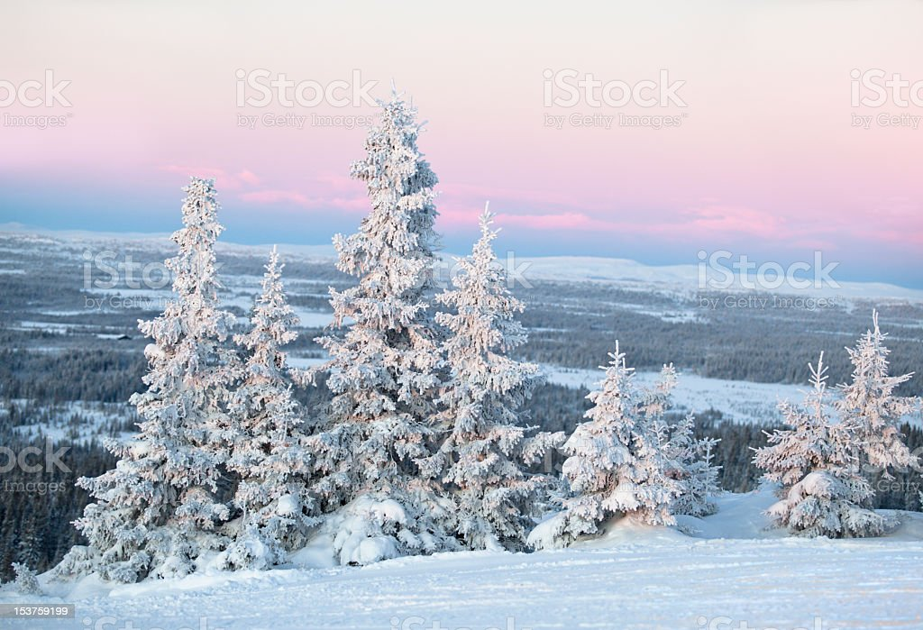 Frosty  forest at cool sunset stock photo